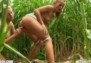 Молодые лесбиянки трахаются в кукурузе