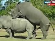 Порно в мире животных - эксклюзивные кадры